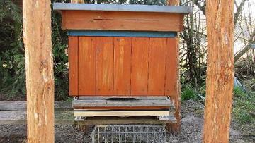 Badają pszczoły w lasach, by ratować ich populację